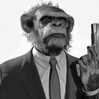 Chimp with a gun